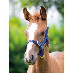 Shires Foal Headcollar