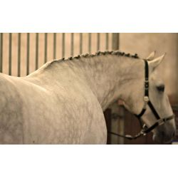 Eqclusive Haas White Grey Coloured Horse Brush Pack