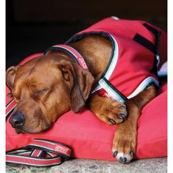 Horseware Amigo Waterproof Dog Rug 100g Red