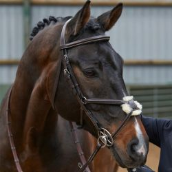 John Whitaker Eastwood Mexican Bridle BR050A