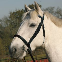 JHL Raised Cavesson Bridle