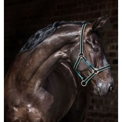Horseware Amigo Headcollar Black Teal