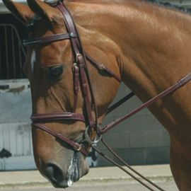 John Whitaker Elasticated Training Reins