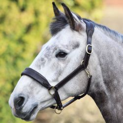 Shires Blenheim Cushioned Travel Headcollar